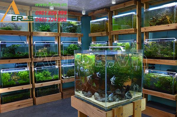 op 10 mẫu thiết kế cửa hàng cá cảnh nhỏ đẹp nhất 2019