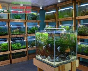 Top 10 mẫu thiết kế cửa hàng cá cảnh nhỏ đẹp nhất